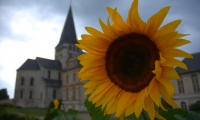 Girasole in Normandia